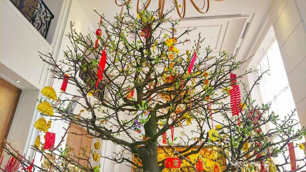 apricot blossom tree for Tet - New Year Holiday