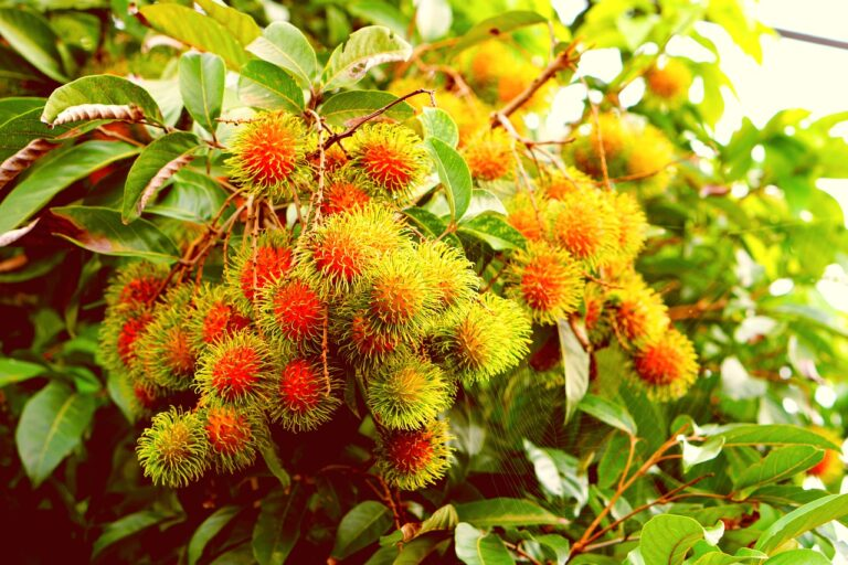 Top 5 exotic tropical fruits in Vietnam, you must try